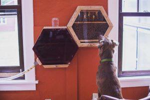 ¿Necesitás algo nuevo para tu casa? Una empresa te instala un panal de abejas 🐝