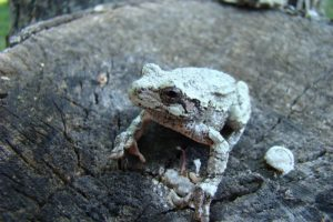 9 datos curiosos de la naturaleza que no conocías 🌳