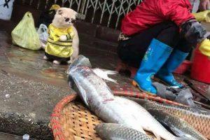Conocé al gato que vende pescado en las calles de Vietnam 🐱🐟