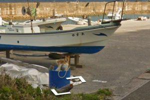 Un perro persigue al auto de Google y ahora está en un montón de imágenes del Street View 🐶