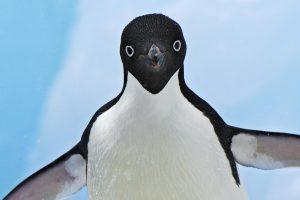 15 pingüinos torpes con los que te vas a sentir identificado